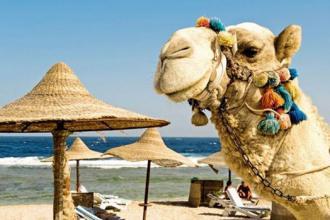 Підбір туру в Єгипет!!!