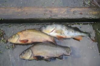 Баня   САКУРА  Рибальство фотолатерея