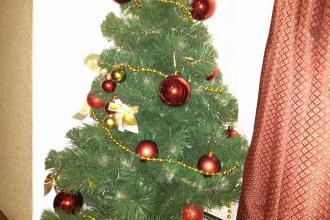 новорічний настрій, Аліса фото #13