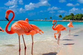 Сонячна Домінікана стає доступною!!! (від 2190 доларів за двох)