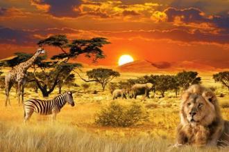 Джамбо! Тобто «привіт», як кажуть у Танзанії