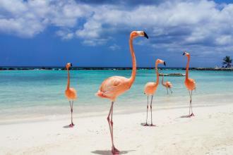 Плануйте відпустку завчасно. Відпочинок в сонячній Домінікані