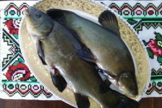 """Рибальство, Російська і Японська Баня  """"САКУРА"""" фото #3"""