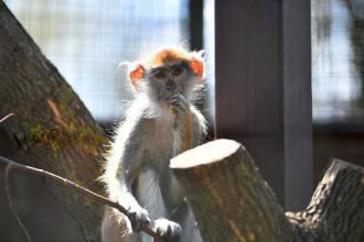 Зоопарк відновить роботу з 12.05