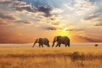 Фото туристичні тури в Південна Африка