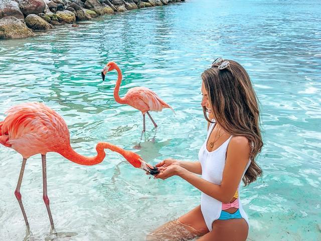 фото туру Плануйте відпустку завчасно. Відпочинок в сонячній Домінікані
