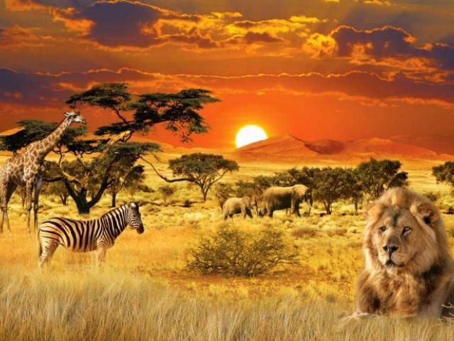 фото туру Джамбо! Тобто «привіт», як кажуть у Танзанії