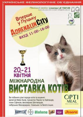 """Міжнародна виставка котів """"Вперше у Луцьку"""""""